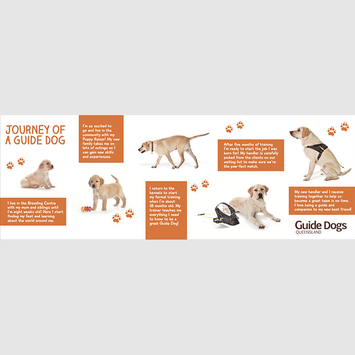 Journey of a Guide Dog