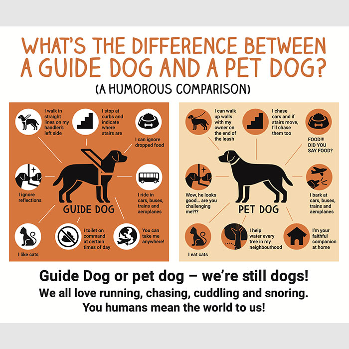 Guide Dogs vs Pet Dogs